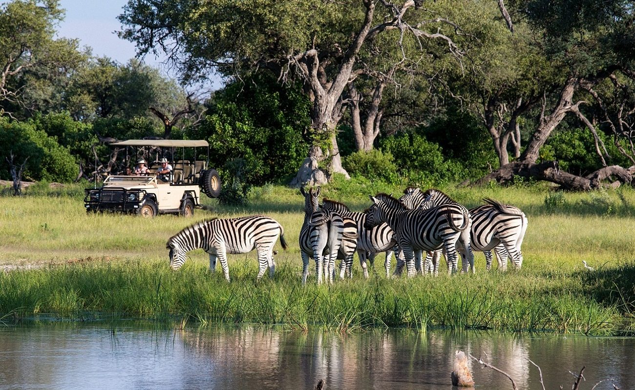 Zebras auf einer Pirschfahrt bei Vumbura Plains