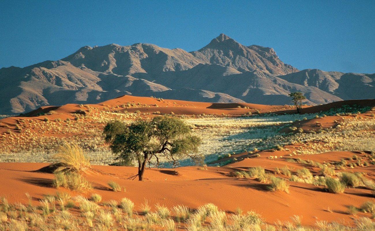Die typischen roten Dünen Namibias