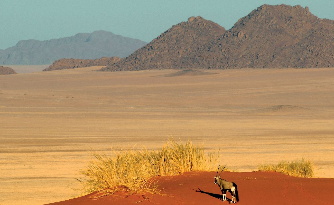 Ein Oryx in den beeindruckenden Dünen der Namib Wüste