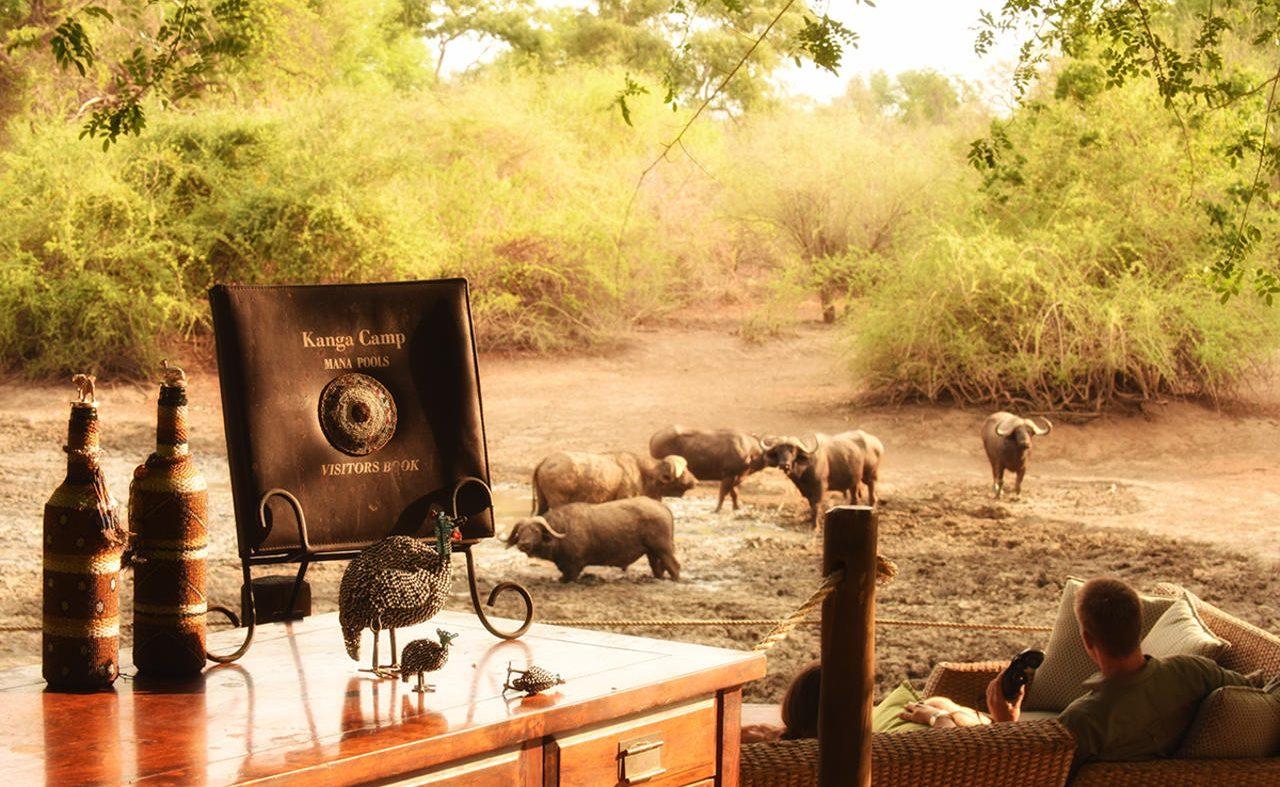 Armchchair Safari in Kanga