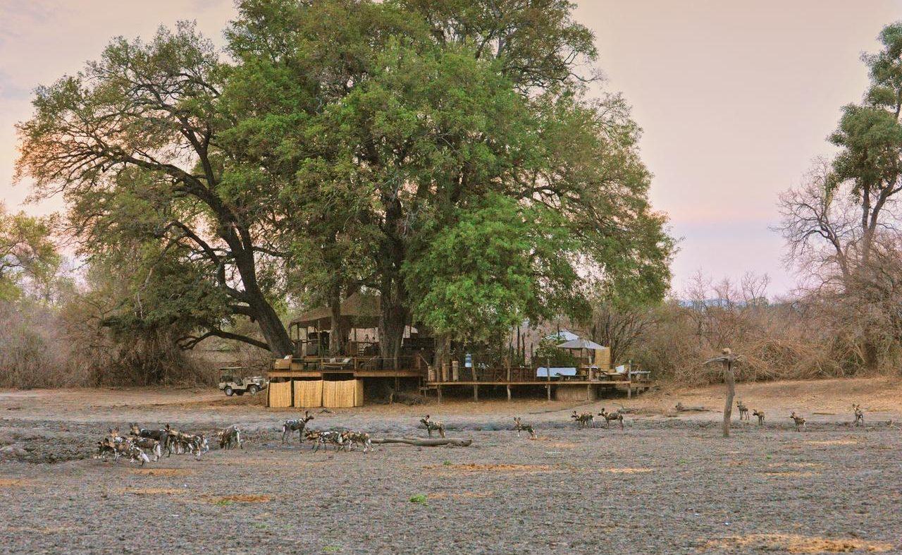 Wildhunde vor dem Kanga Camp