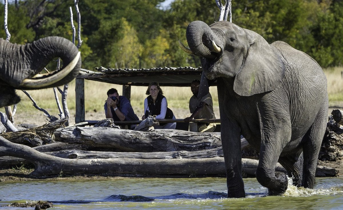 Hide in Little Makalolo mit Elefantenbeobachtung