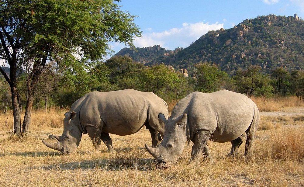 Rhino Trekking im Matobo Nationalpark