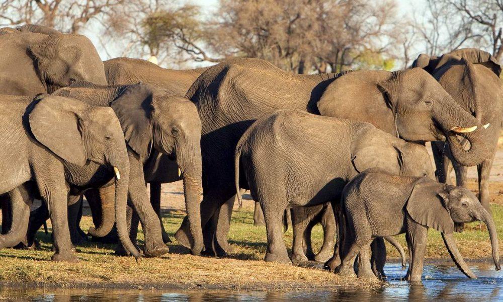 Individuelle Rundreisen in Simbabwe mit Genuss Touren
