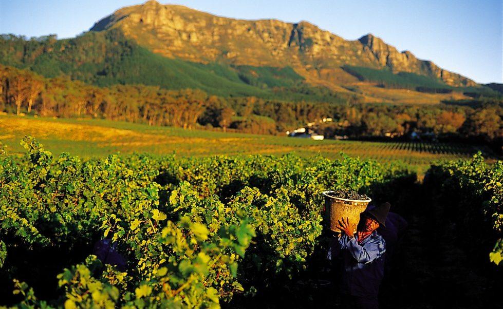 In den Winelands von Südafrika