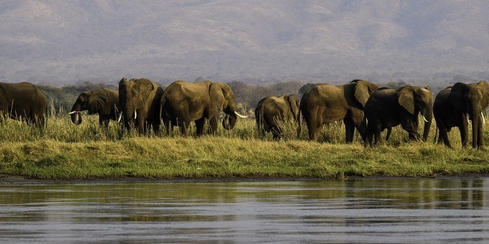 Safaris in Simbabwe im Afrika Spezialist Genuss Touren