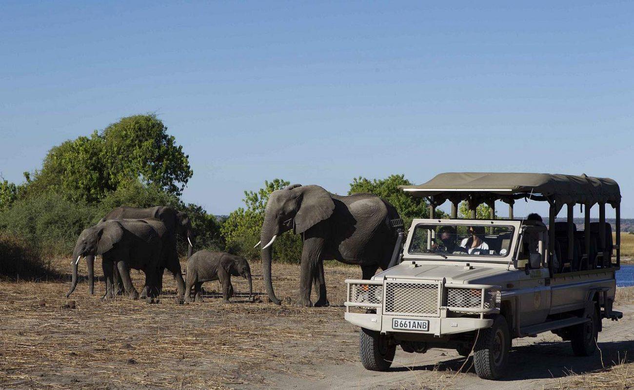 Viele Elefanten sieht man bei einem Game Drive im Chobe Nationalpark