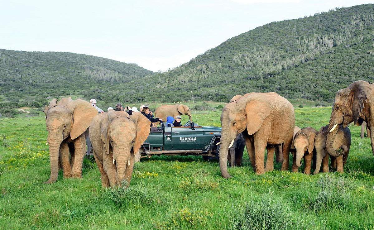 Elefanten im Kariega Game Reserve