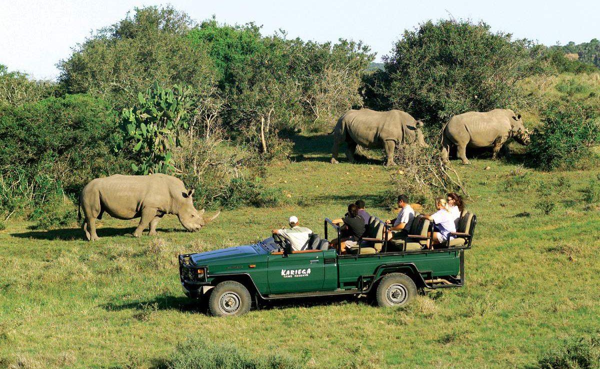 Nashörner im Kariega Game Reserve