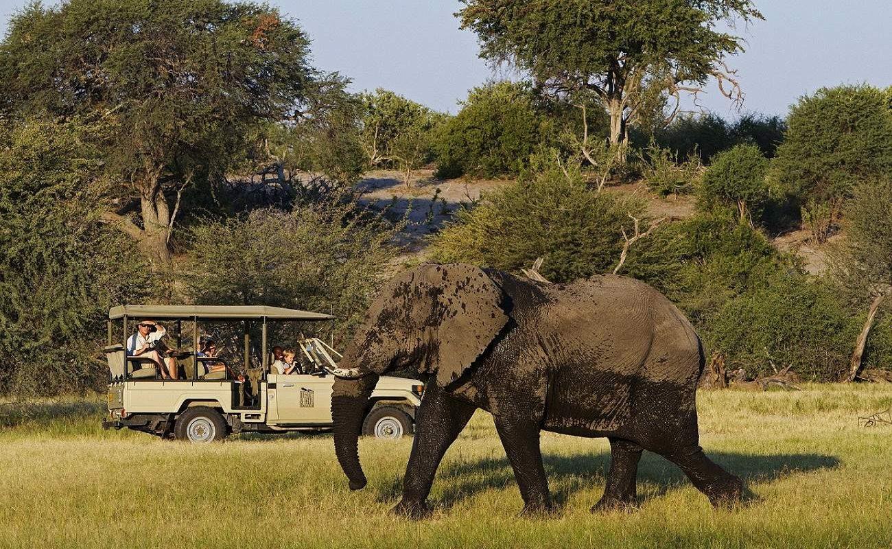 Auf Ihrer Pirschfahrt sehen Sie auch Elefanten