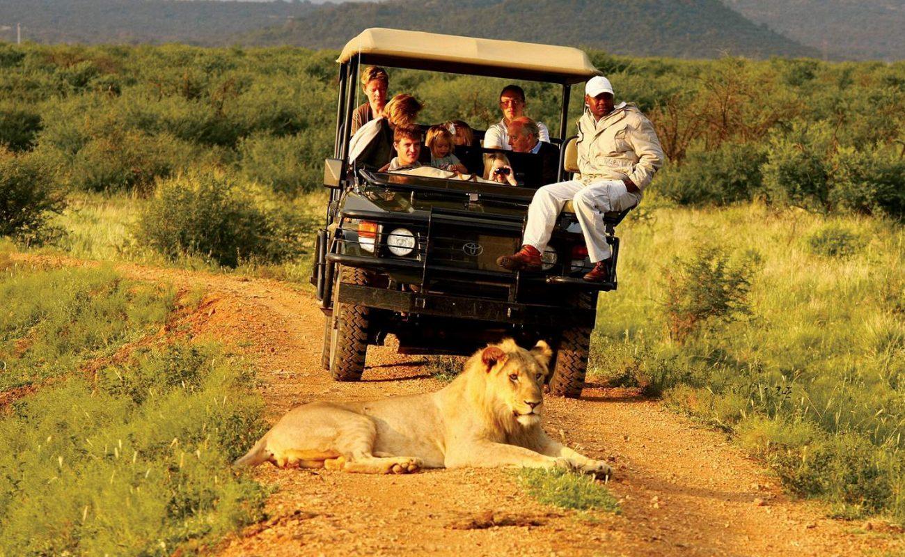 Pirschfahrt im Madikwe Game Reserve
