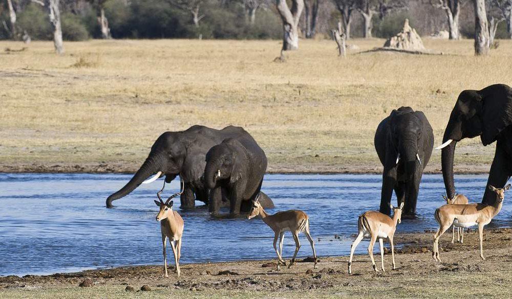 Rundreise Botswana Simbabwe Auf der Spur der Elefanten
