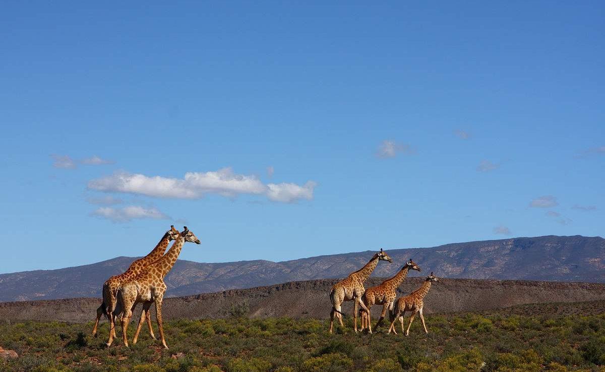Buchen Sie Ihre Luxusreise nach Südafrika in die Karoo mit Genuss Touren