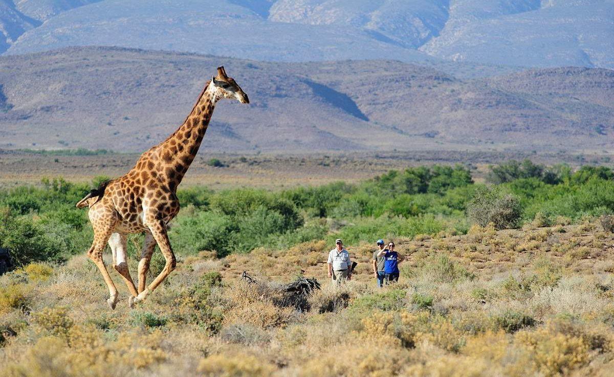 Auf einer Pirschwanderung kommen Sie in Sanbona den Tieren ganz nah
