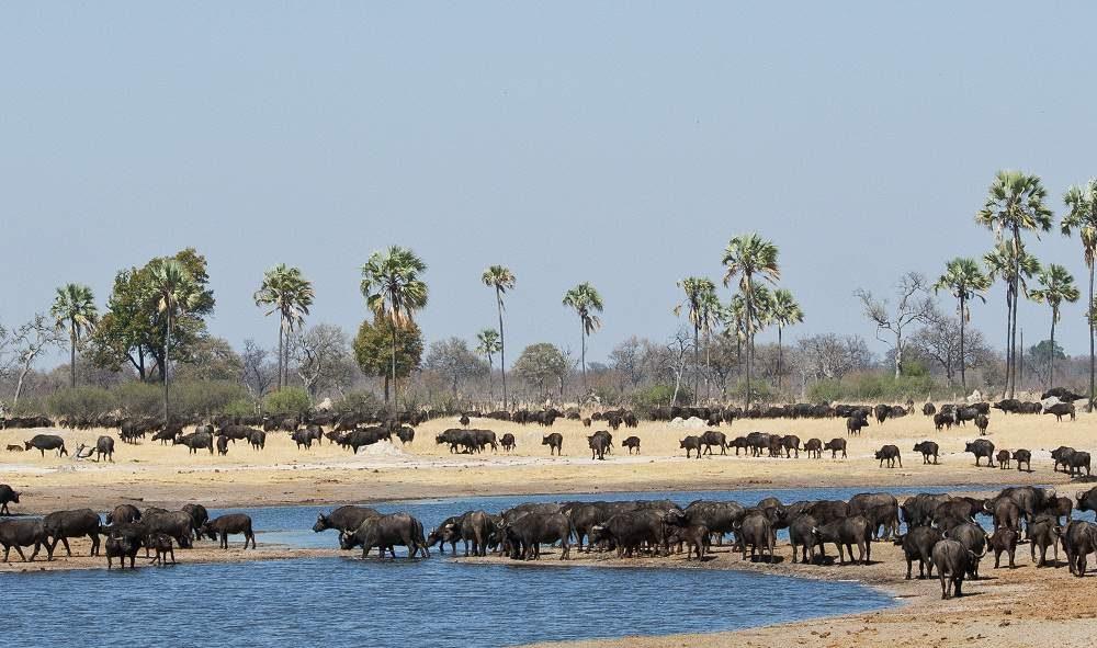 Simbabwe Rundreise Victoria Falls, Mana Pools, Hwange