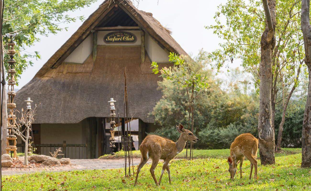 Eingang zum Victoria Falls Safari Club