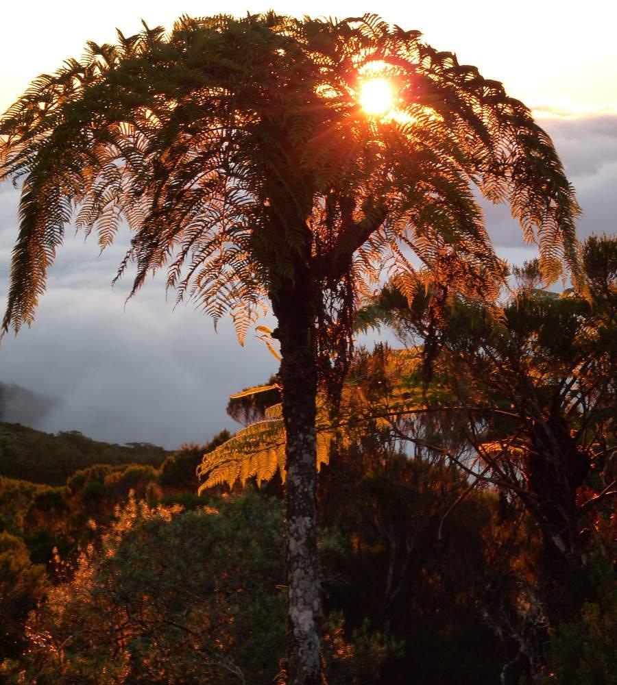 Baumfarn Sonnenuntergang Cirque de Mafate La Réunion