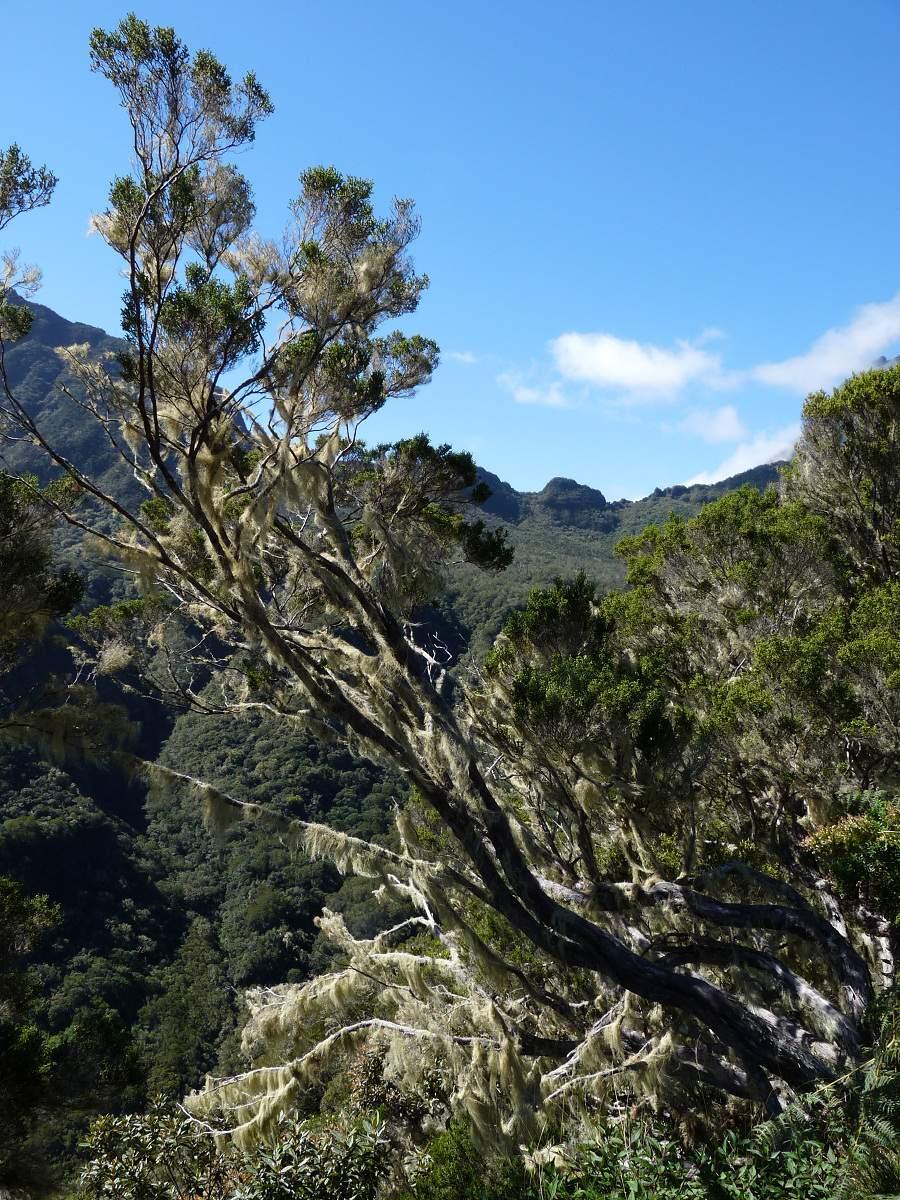 Märchenwald auf La Réunion