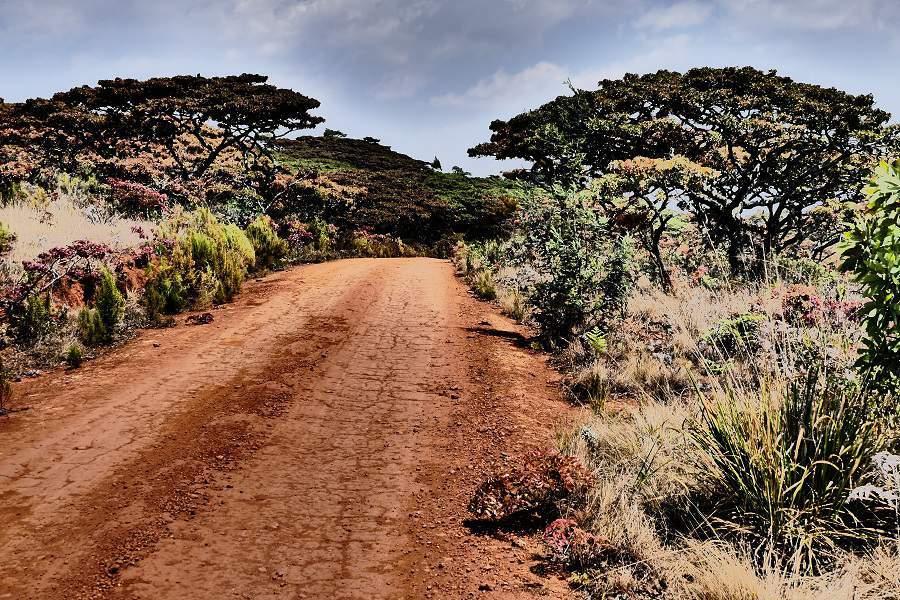Straße uns Masasa Bäume im Nyanga Nationalpark in Simbabwe