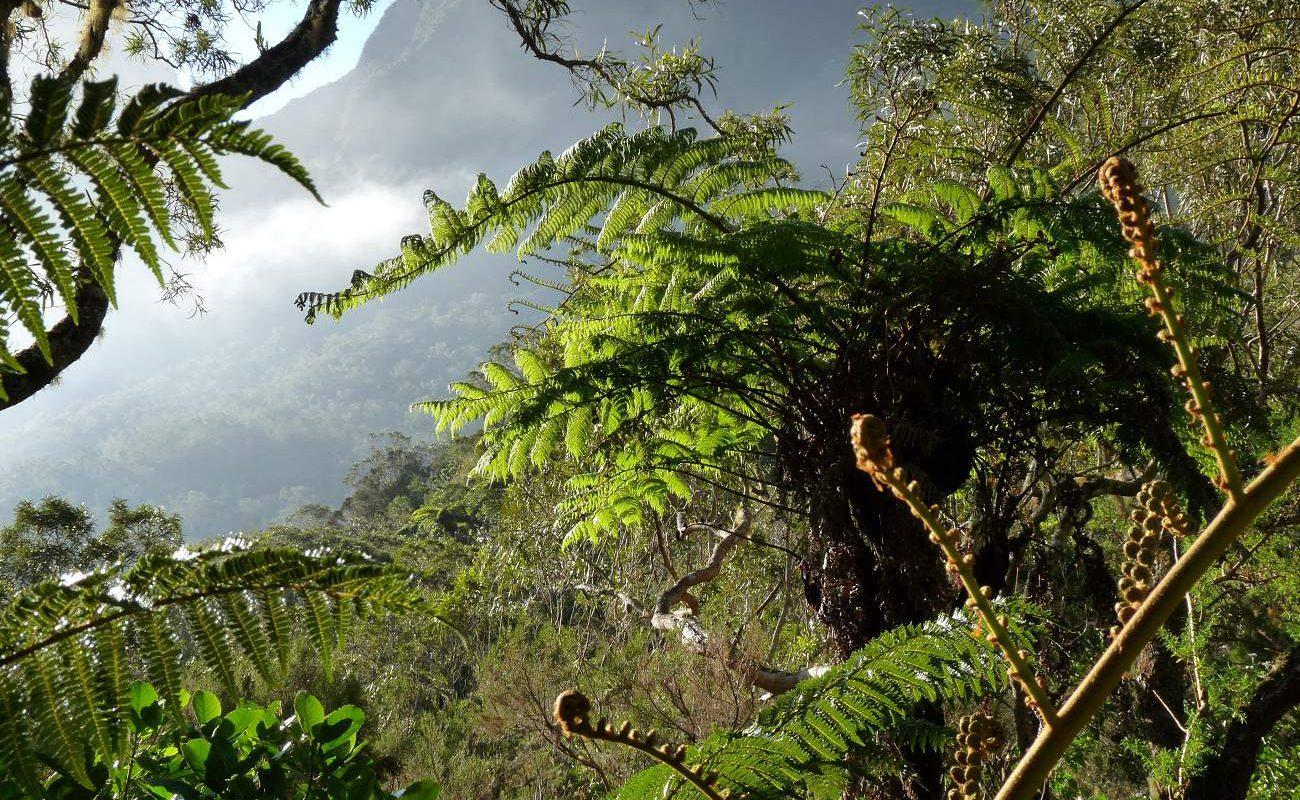 Tropenvegetation auf La Réunion