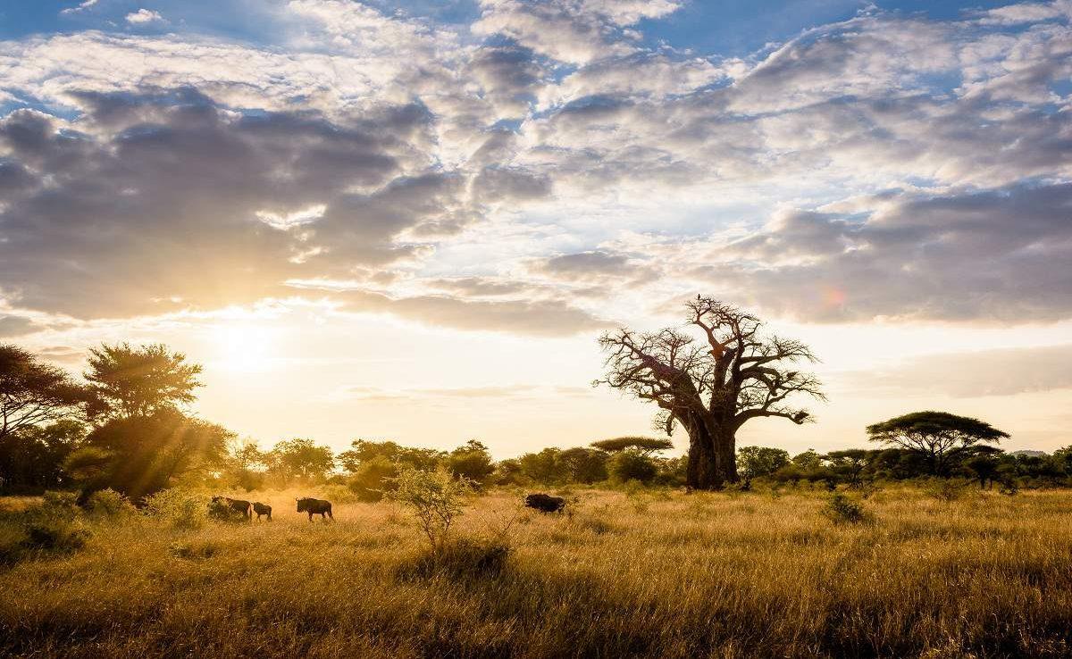 Baobabs im Malilangwe Wildlife Reserve
