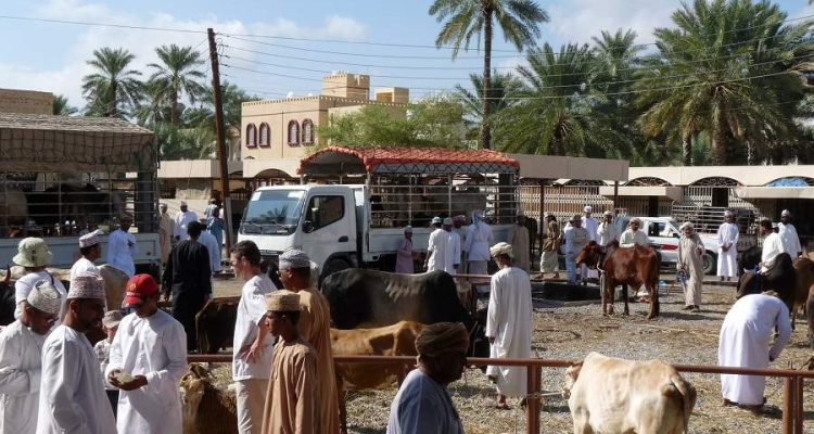 Viehmarkt in Nizwa am Freitag