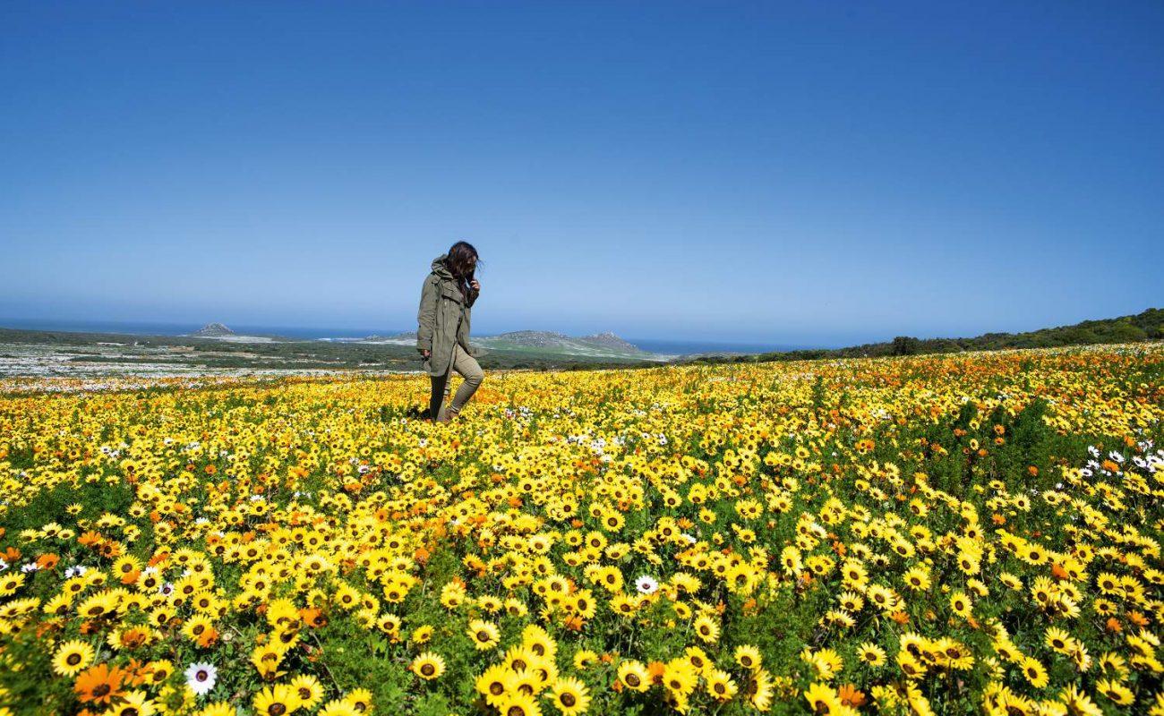 Frühling im Westcoast Nationalpark