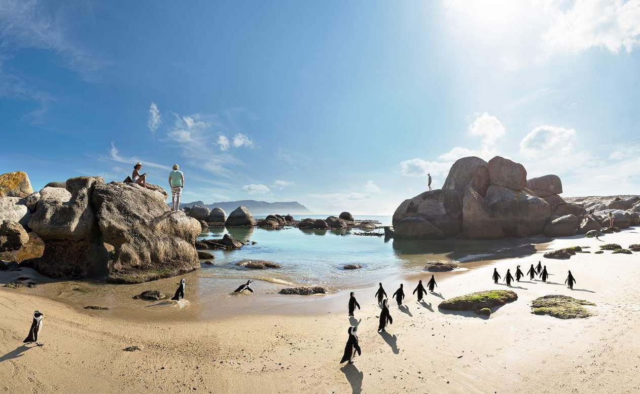 Brillenpinguine am Boulders Beach