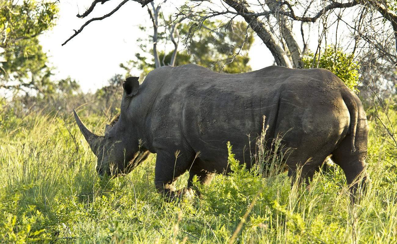 Nashörner im Hluhluwe