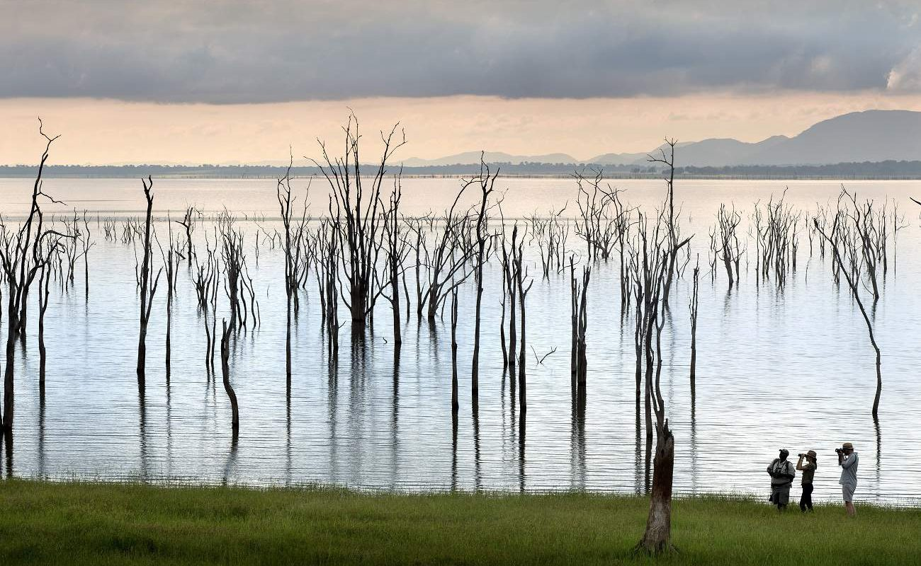 Bäume im Lake Kariba Simbabwe