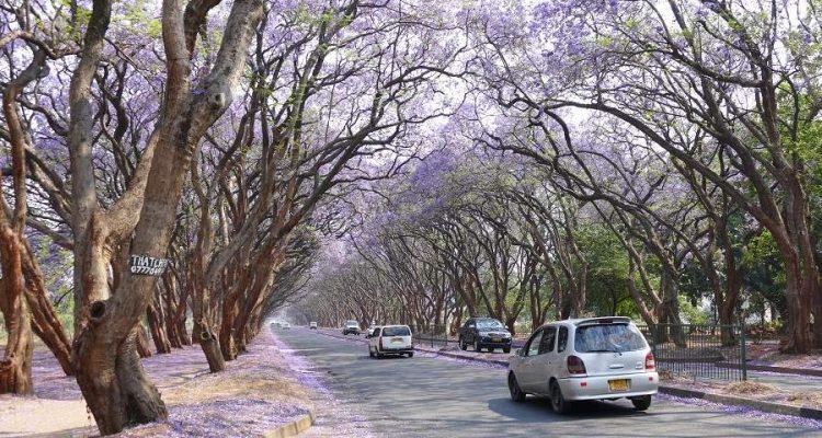 Mietwagenfahren in Simbabwe