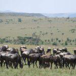 Privates Wildreservat vs. Nationalpark