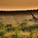 Highlights im iSimangaliso Wetland Park