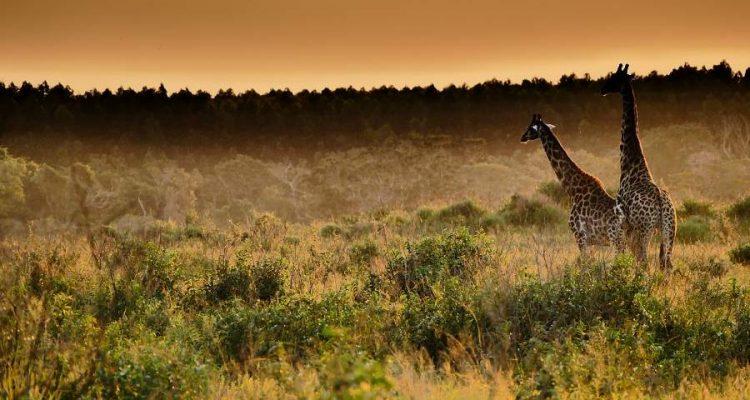 Highlights im iSimangaliso Wetland Park