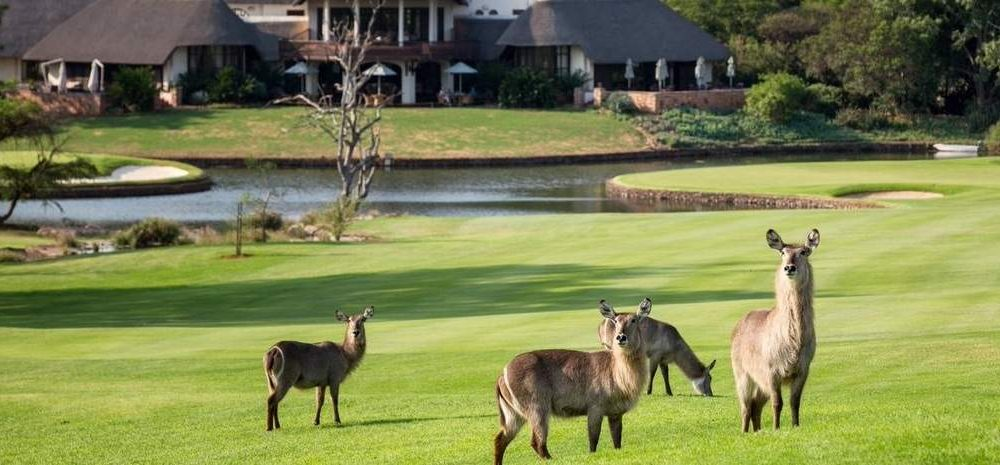 Krüger Nationalpark für Golfspieler