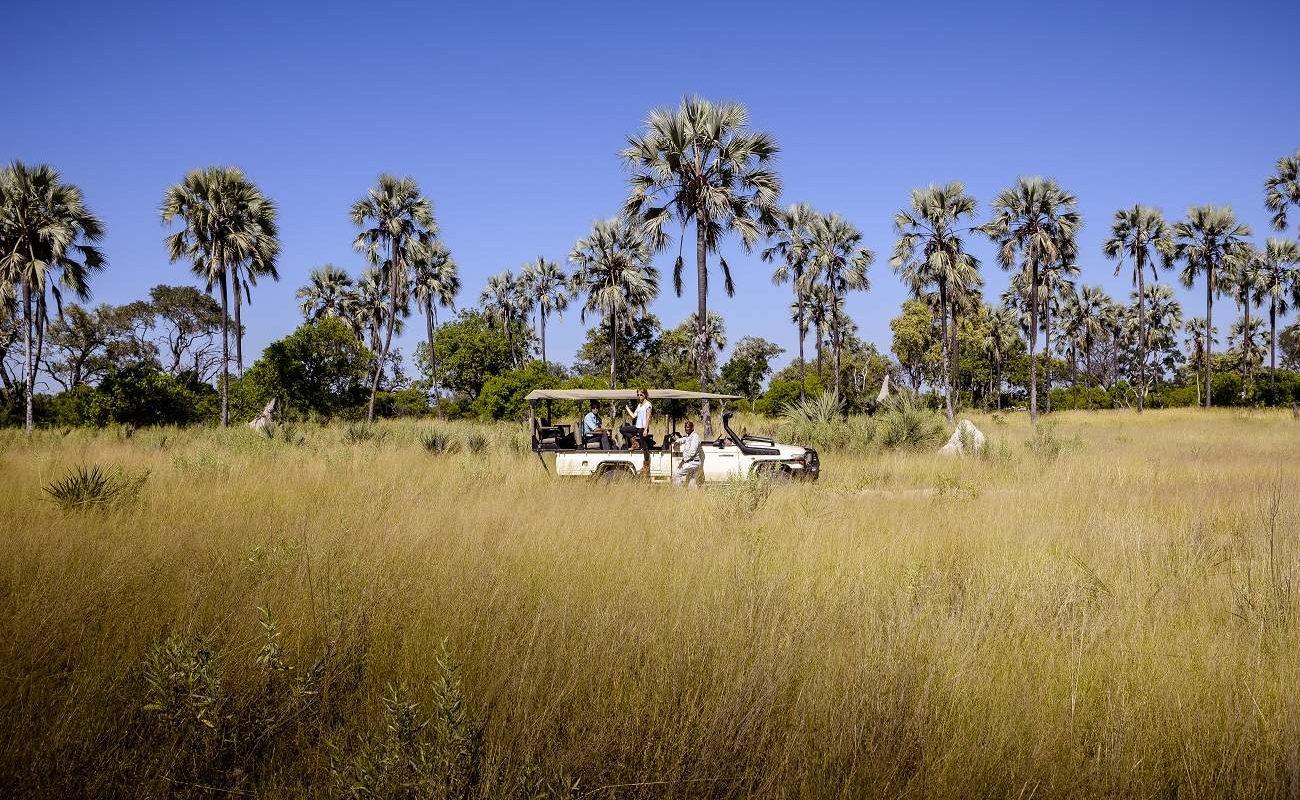 Pirschfahrt im Moremi Game Reserve
