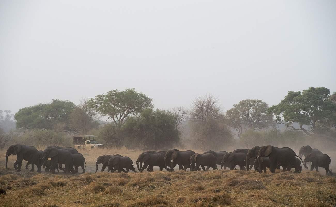 Elefantenherden im Bwabwata Nationalpark