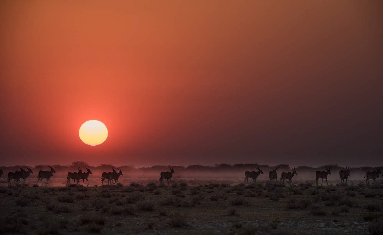 Namibia für Genießer - Sonnenuntergang im Etosha