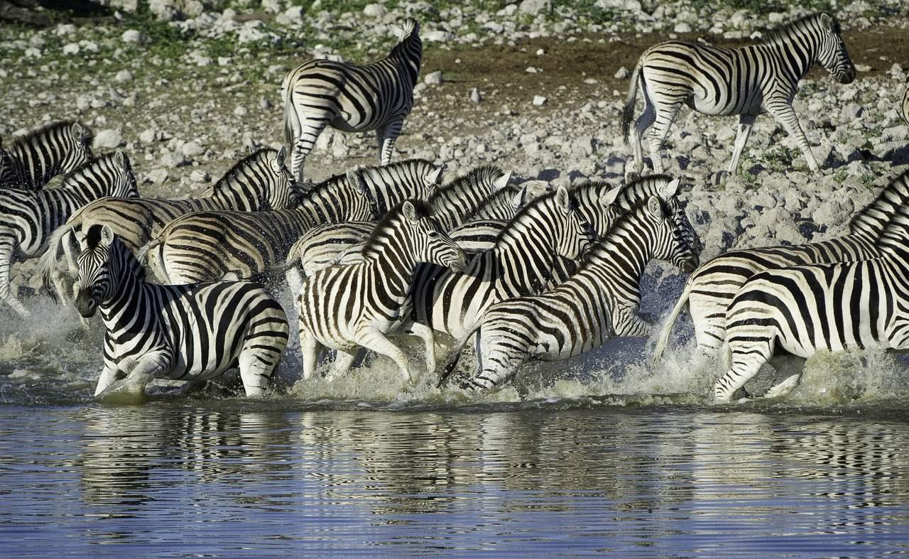 Etosha - Höhepunkt jeder Rundreise in Namibia