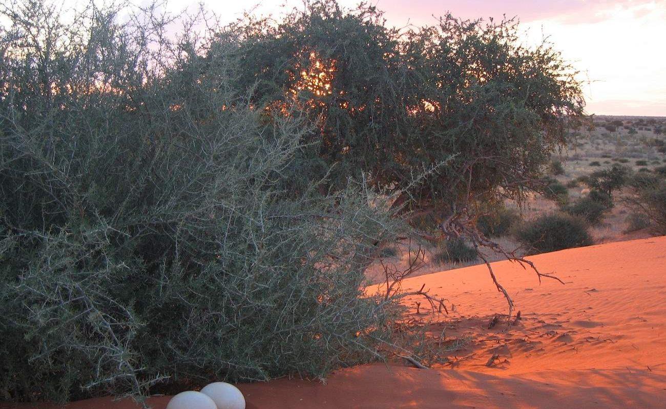 Auftakt der Namibia Rundreise in der Kalahari