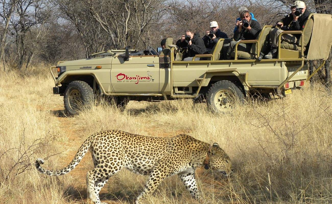 Leoparden Beobachtung in Namibia