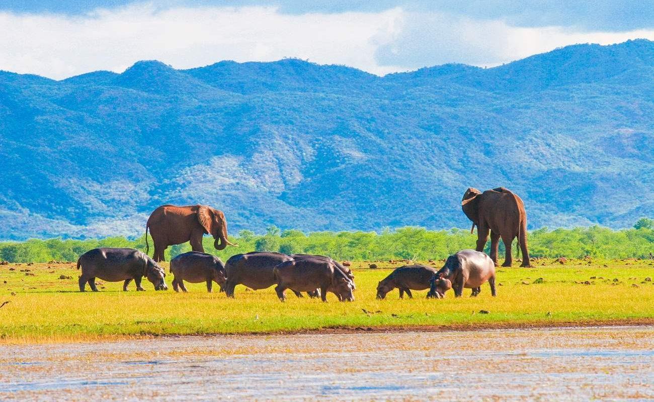 Elefanten und Hippos im Matusadona National Park