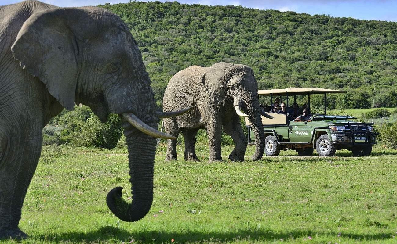 Elefanten im Sharmwari Game Reserve