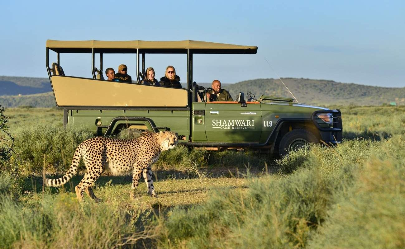 Ein Gepard in Shamwari