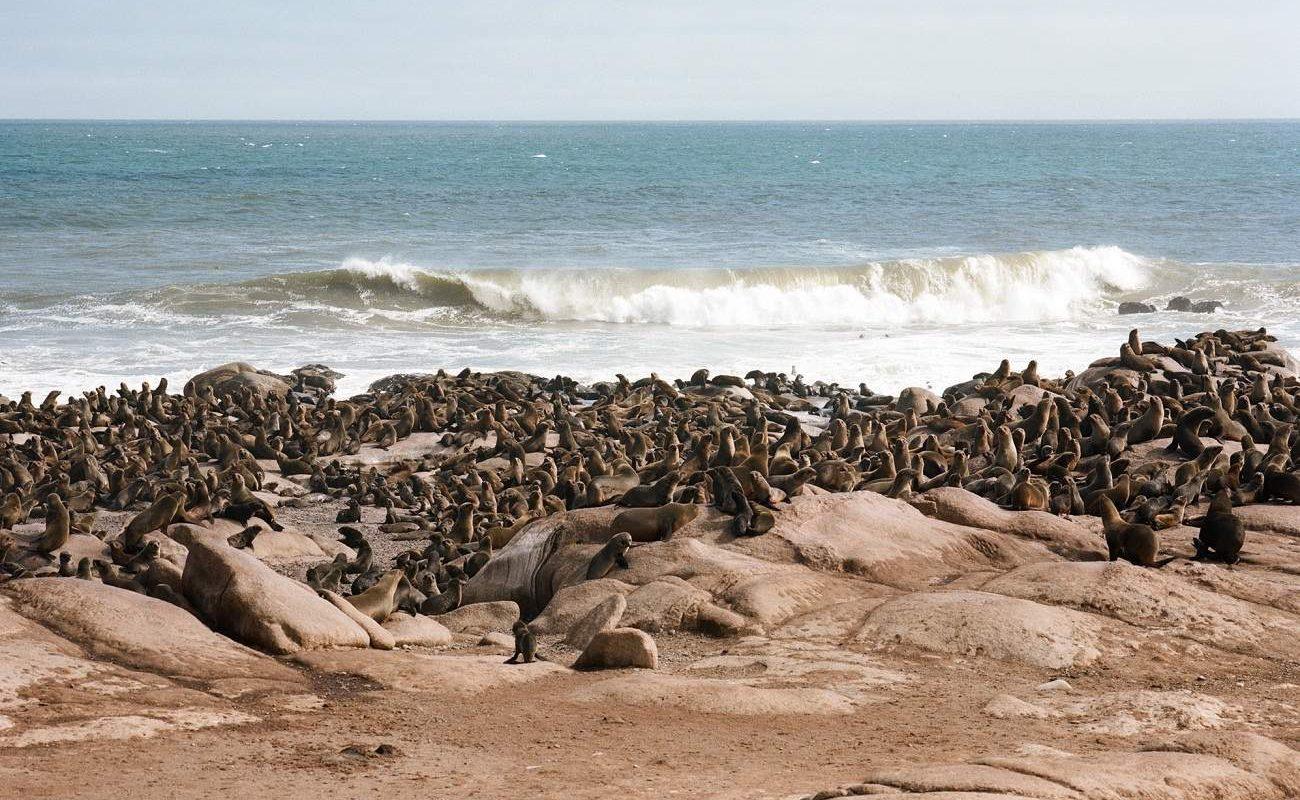 Robben an der Mowe Bay