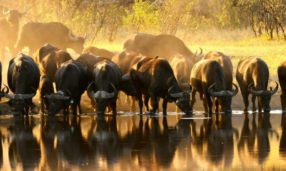 The Hide Hwange Nationalpark Simbabwe