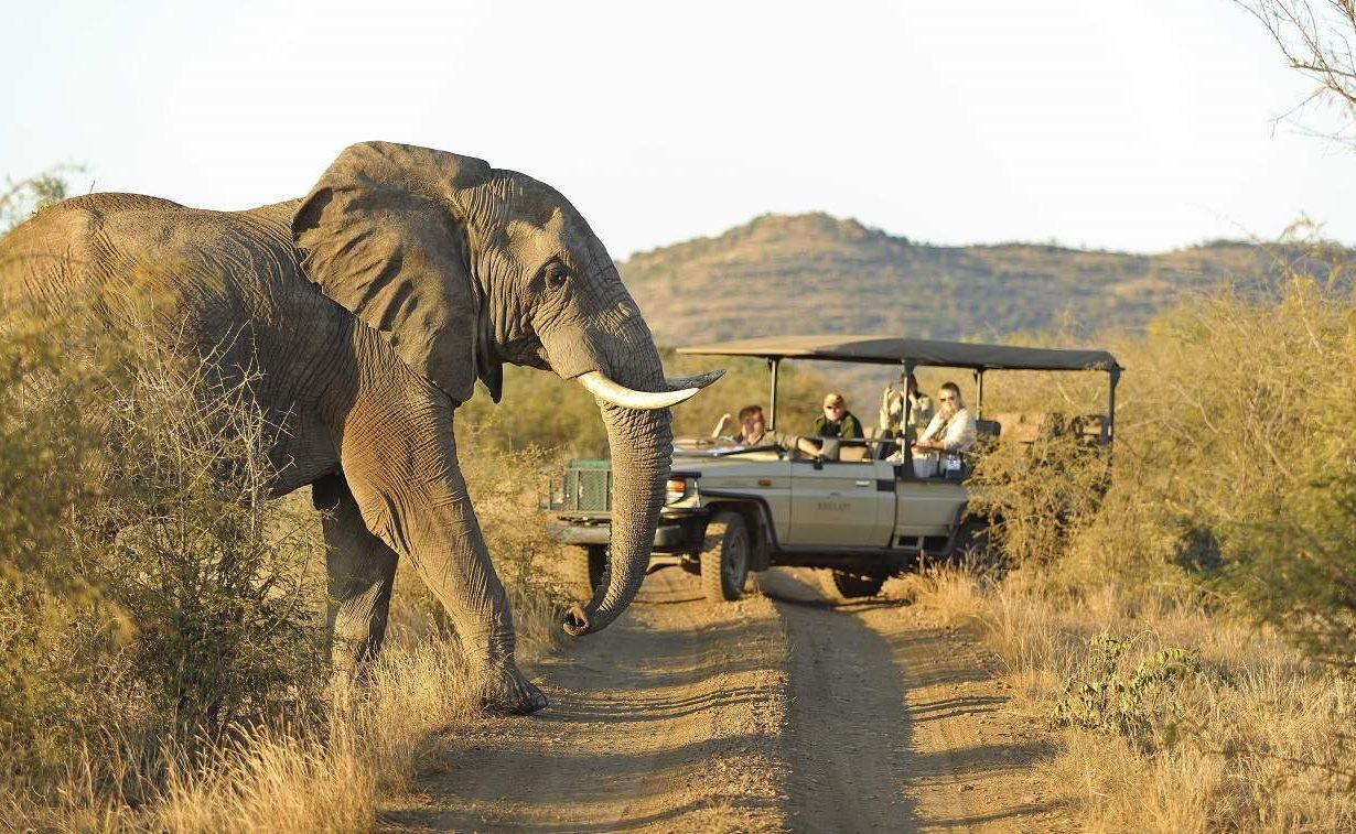 Auf Pirschfahrt im Madikwe Game Reserve