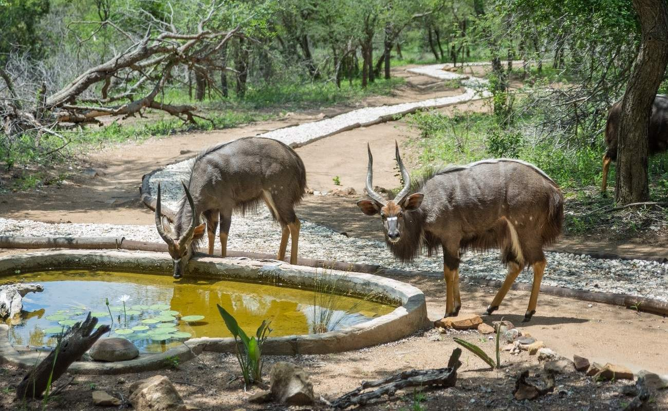 Tiere im rustikalen Camp im Thornybush Game Reserve