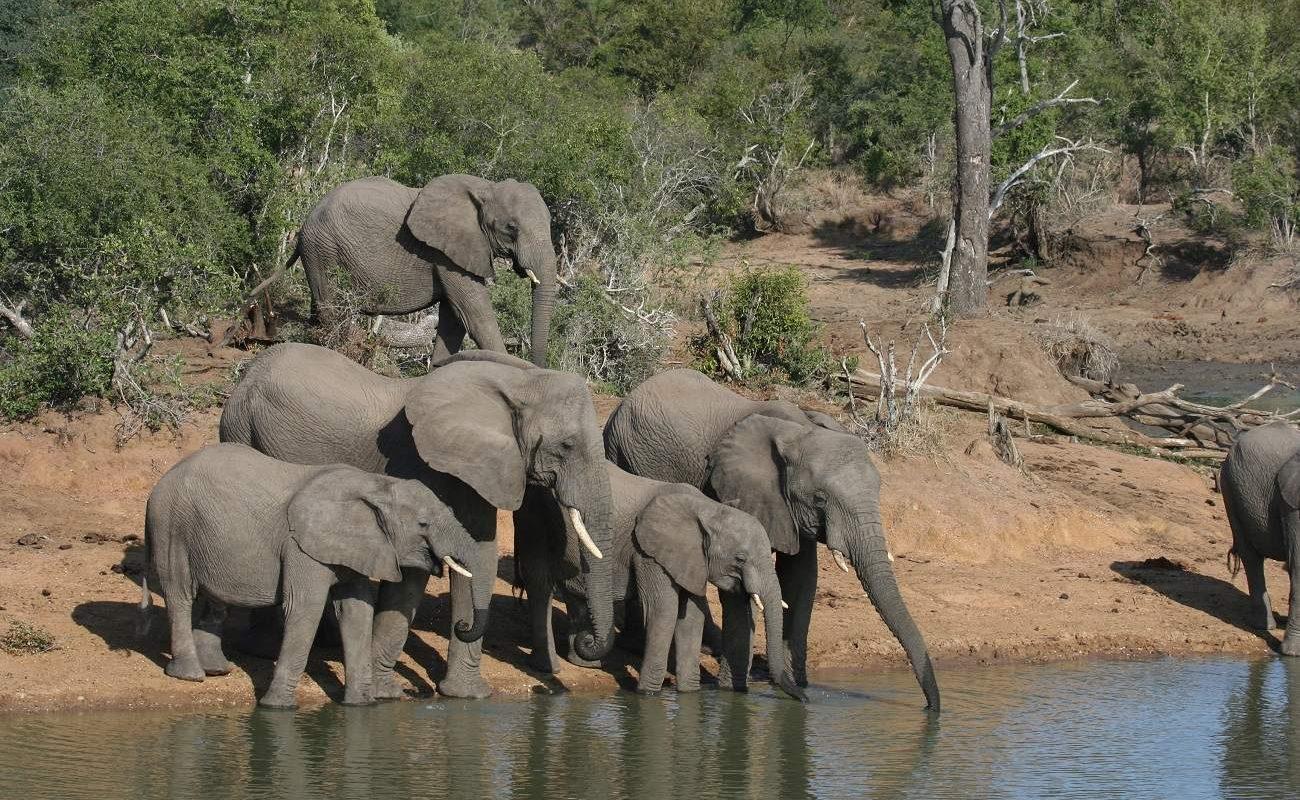 Elefanten am Krüger Nationalpark
