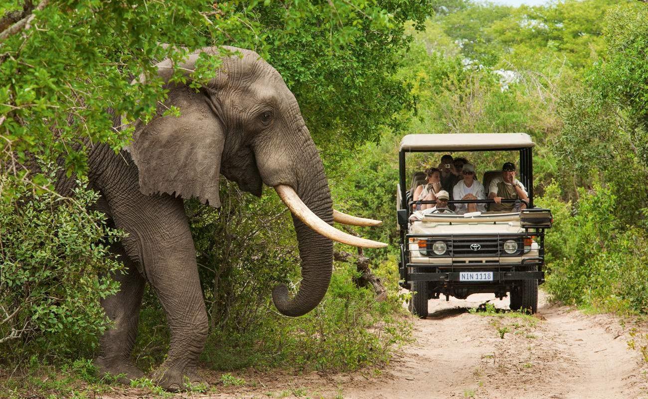 Pirschfahrt beim Krüger Nationalpark